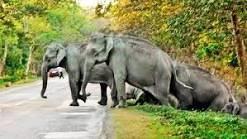 CNTd_mdUYAY0h8D--Elephant Crossing